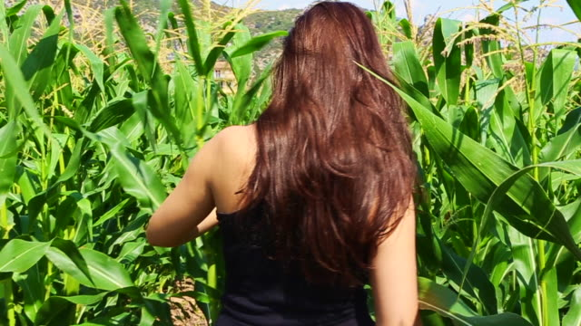 Beautiful girl walking inside a corn crop field in the Catalan Pyrenees countryside during summertime in a travel vacations through the region.