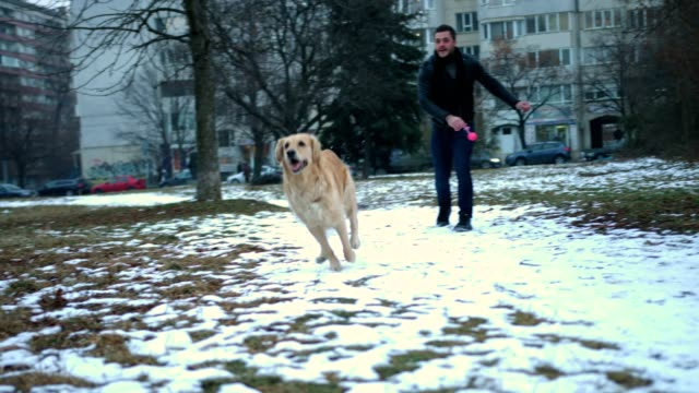 Beautiful golden retriever dog playing with a boy outdoors