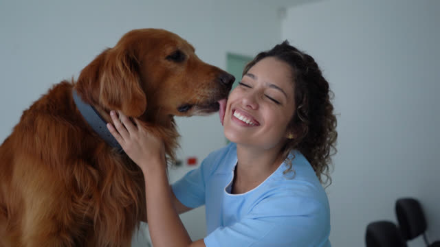 beautiful golden retriever licking female veterinarian's cheek during consult while she smiles - veterinarian stock videos & royalty-free footage