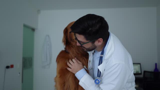 vidéos et rushes de beau golden retriever léchant sa joue de vétérinaires pendant la consultation - golden retriever