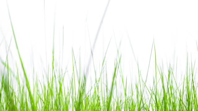 beautiful grass growing - landscaped stock videos & royalty-free footage