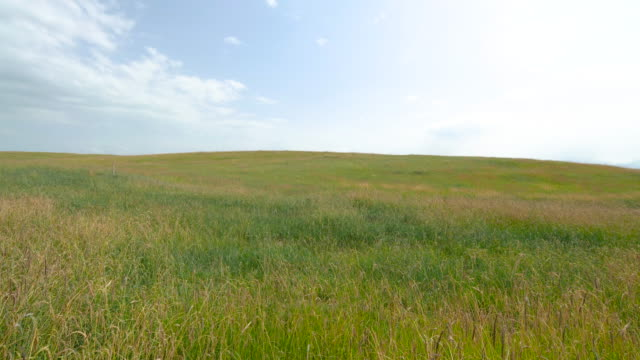 beautiful grassland in xinjiang, china - grass stock videos & royalty-free footage