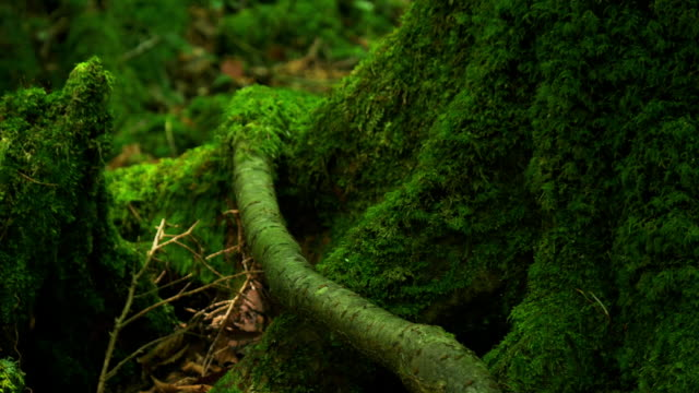 vidéos et rushes de beautiful green a sea of trees - tronc d'arbre