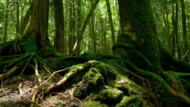 beautiful green a sea of trees - trunk tree stock videos and b-roll footage