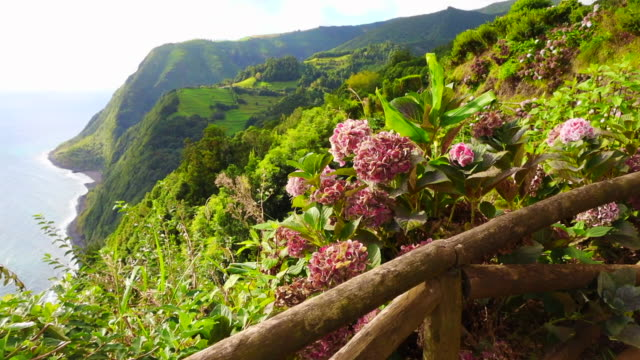 beautiful green cliffs with flowers and coastline in the azores islands. - アゾレス諸島点の映像素材/bロール