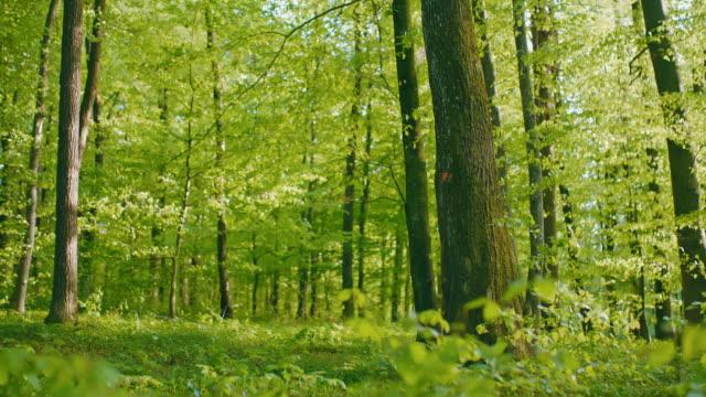 vídeos de stock, filmes e b-roll de ds bela floresta verde balançando ao vento - ensolarado