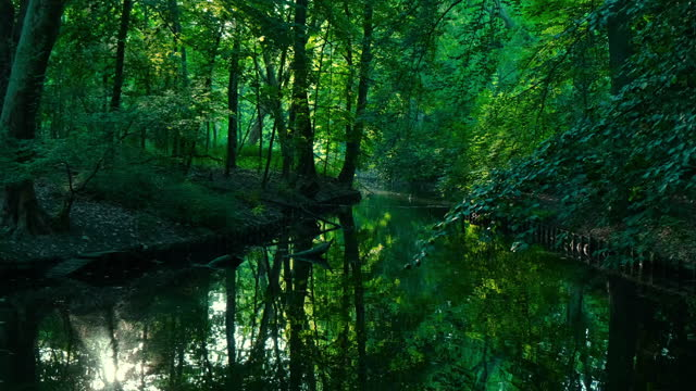 vídeos de stock e filmes b-roll de beautiful green lakeshore - áudio disponível online