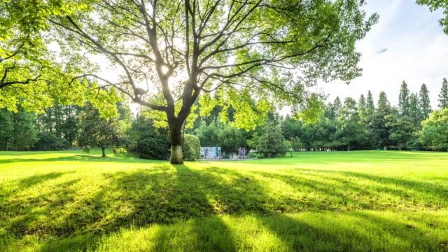 vídeos y material grabado en eventos de stock de hermoso prado verde en el parque en el lapso de tiempo de mañana - sombra