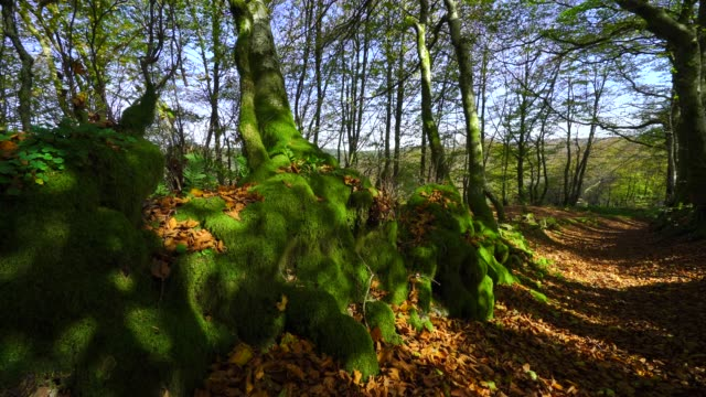 Beautiful green moss in the autumnal forest