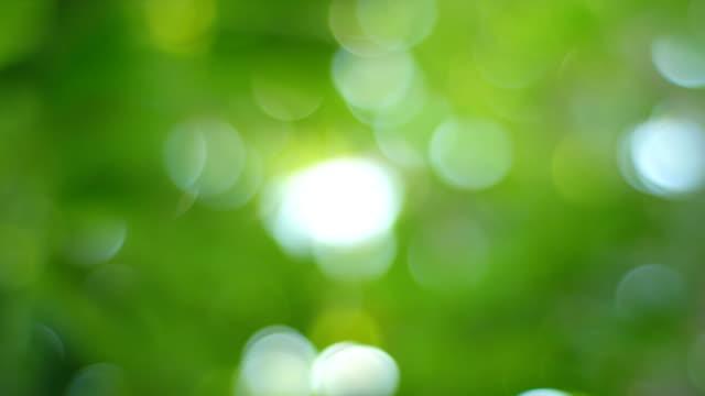 bella natura verde bokeh cerchi - messa a fuoco video stock e b–roll