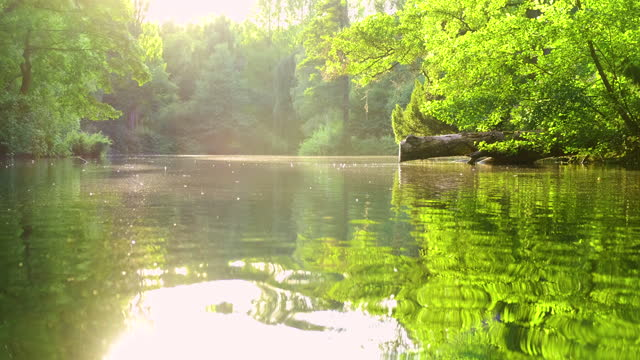 beautiful green pond - pond stock videos & royalty-free footage