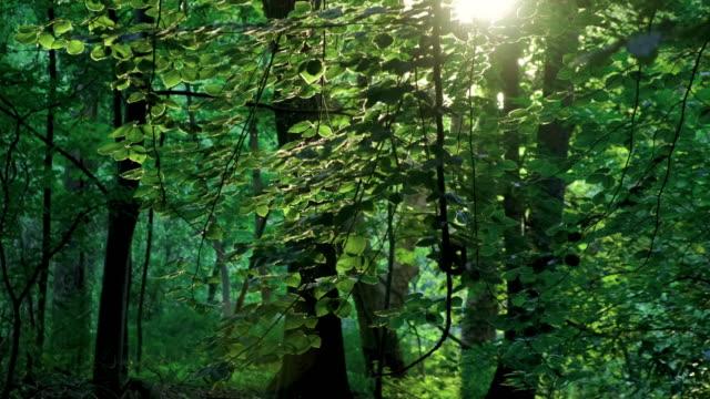 schöner grüner fluss mit singvögeln - grasmückenartige stock-videos und b-roll-filmmaterial