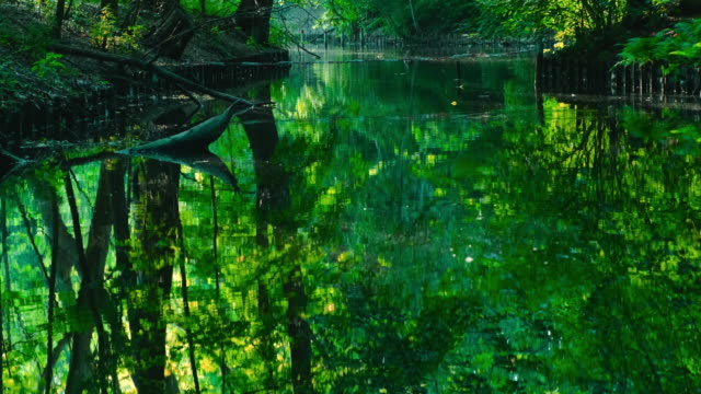 beautiful green river with singingbirds - warbler stock videos & royalty-free footage