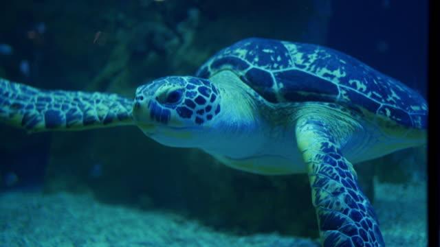beautiful green turtle - loggerhead sea turtle stock videos & royalty-free footage