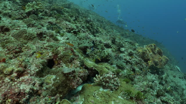 beautiful hard coral reef at orchid island (lanyu), taiwan - philippine sea stock videos & royalty-free footage