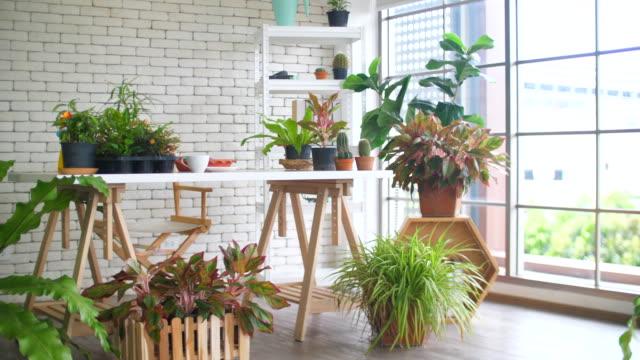 vidéos et rushes de belle boutique de fleuriste à la maison - plante