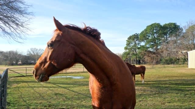 牧草地には美しい馬 - 放牧地点の映像素材/bロール