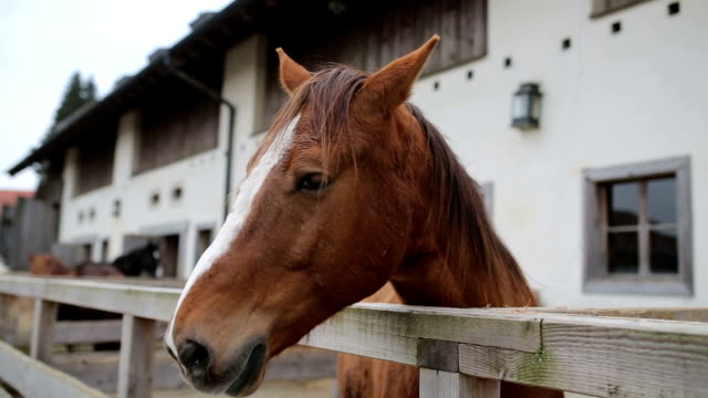 Beautiful horse in stall