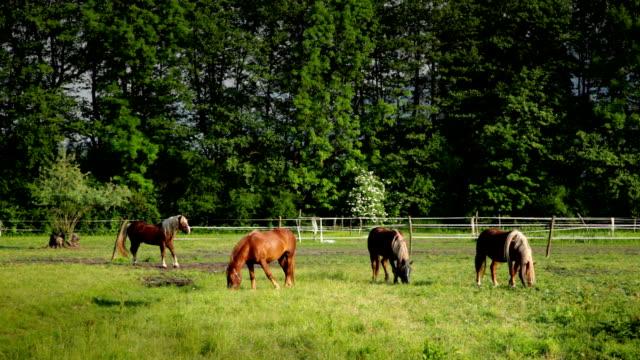 HD: Hermosos caballos en un pasto