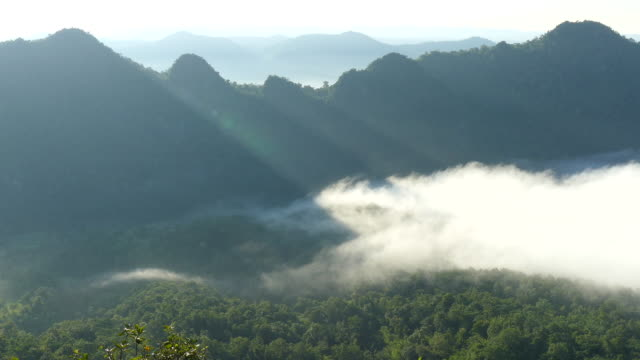 beautiful in the morning with sea-fog over valley at north in thailand - valle video stock e b–roll