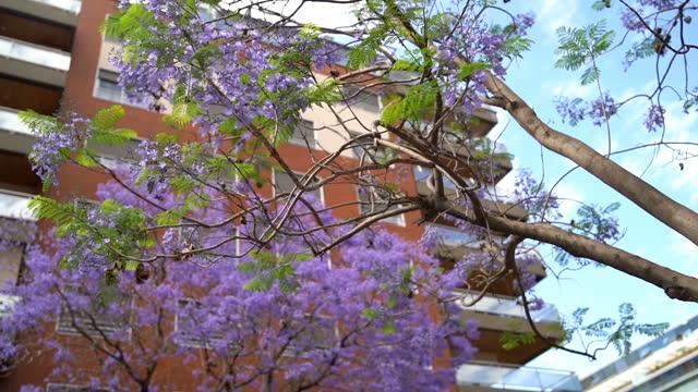 ブエノスアイレスの美しいジャカランダの木 - プエルトマデロ点の映像素材/bロール