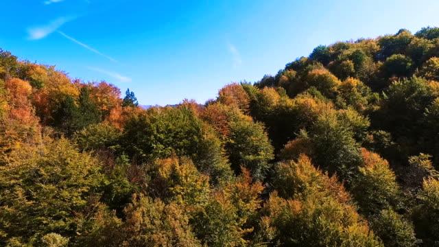 Beautiful Landscape Autumn Forest