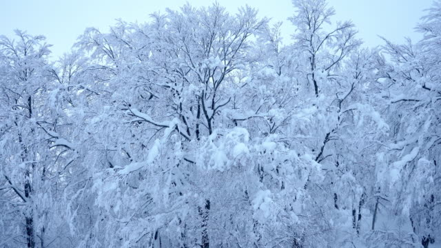 beautiful landscape frozen snow on tree - deep snow stock videos & royalty-free footage