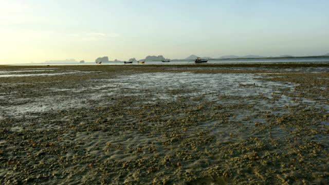 美しい地形、海とビーチの間にカニ干潮 - 木を抱く点の映像素材/bロール