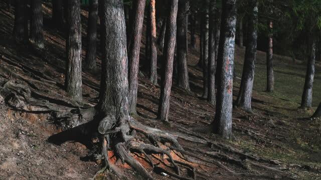 vídeos y material grabado en eventos de stock de hermoso paisaje. la luz refractada de las olas del lago se refleja en los troncos de los pinos. - paisaje espectacular