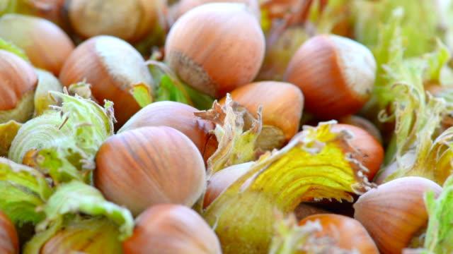 beautiful large hazelnuts, macro - nutshell stock videos & royalty-free footage