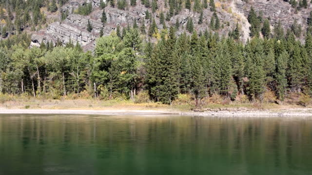 beautiful large mountain river and pine forest shoreline - glacier national park us stock videos and b-roll footage