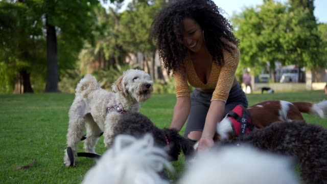 beautiful latina woman playing with dogs outdoors - dog walking stock videos & royalty-free footage