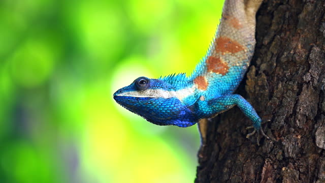 Beautiful Lizard