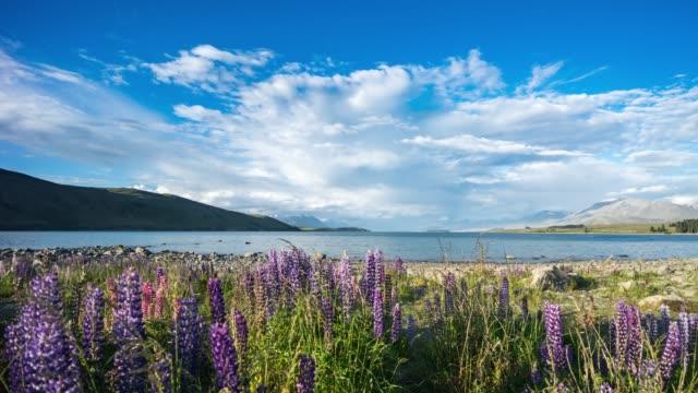 Schöne Lupin Feld am See