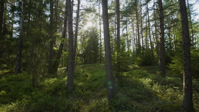 beautiful lush forest in sweden - northern europe stock videos & royalty-free footage