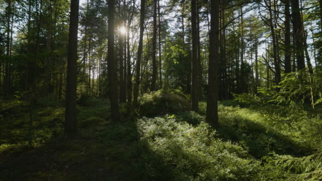 beautiful lush forest in sweden - moss stock videos & royalty-free footage