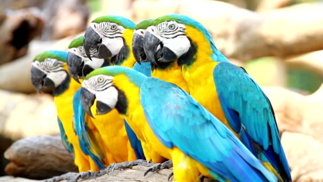 beautiful macaw - animal imitation stock videos and b-roll footage