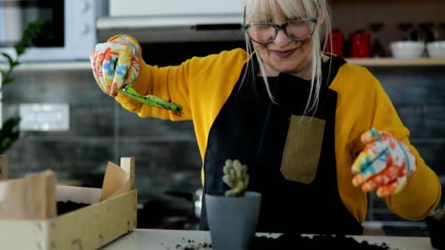 schöne reife frau topfpflanzen indoor - hausdekor stock-videos und b-roll-filmmaterial