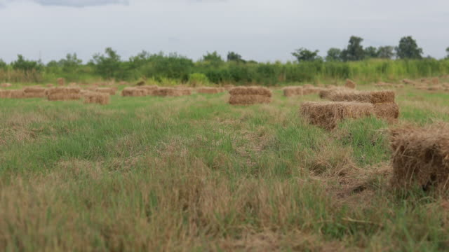 beautiful meadow with hay stacks on farm and forest - hay stock videos & royalty-free footage