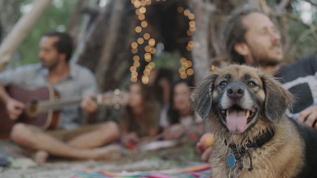 vídeos de stock e filmes b-roll de a beautiful millennial group of friends play music at a beach party while camping - vídeo musical