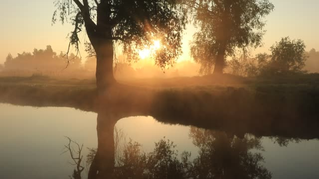beautiful misty dawn in the spring on the river - wicker stock videos & royalty-free footage