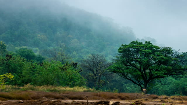 Beautiful moment of moving fog over the mountain in rain-forest at morning, Time lapse video
