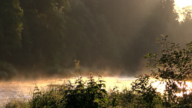 beautiful morning at the river - fog stock videos & royalty-free footage