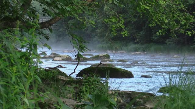 beautiful morning at the river - fantasy stock videos & royalty-free footage