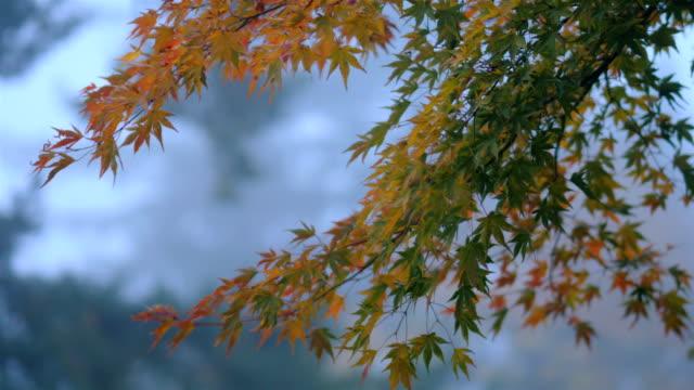 beautiful morning light seeping through fall leaves - portland oregon fall stock videos & royalty-free footage