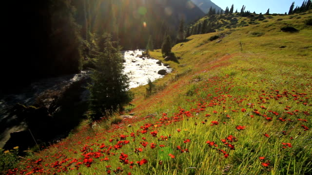 beautiful mountain landscape with flowers and mountain river - wildflower stock videos & royalty-free footage