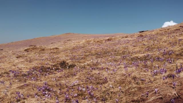 beautiful mountain nature - serbia stock videos & royalty-free footage