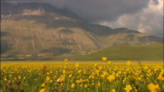beautiful mountain range with a meadow of yellow flowers in foreground - ウンブリア州点の映像素材/bロール