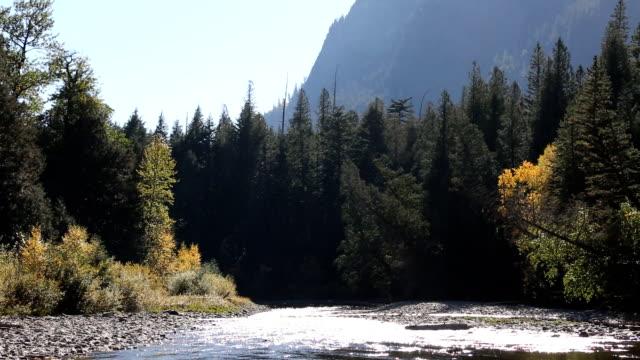 vídeos de stock, filmes e b-roll de belo rio que flui através da floresta de montanha - glacier national park us