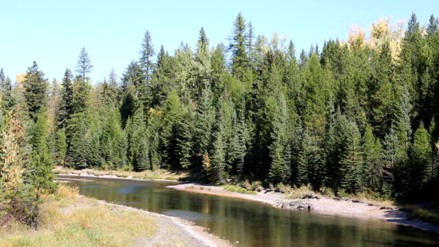beautiful mountain river flowing through pine forest. - glacier national park us stock videos and b-roll footage